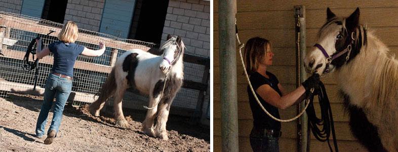 CircleQuest horse handling